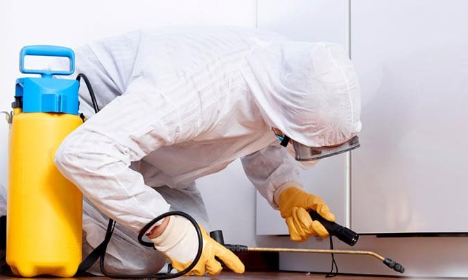 Consejos para mantener a raya las plagas en nuestro hogar.