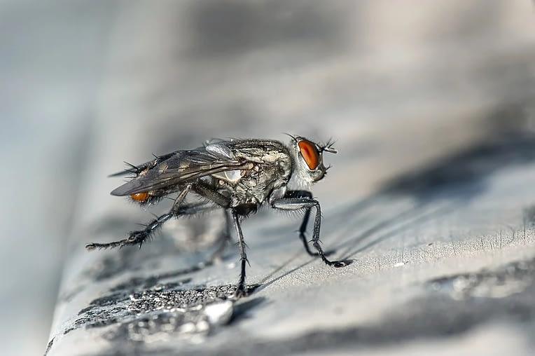 Cómo prevenir y combatir las plagas de insectos en casa